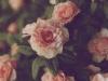 Tumblr Flower Wallpaper