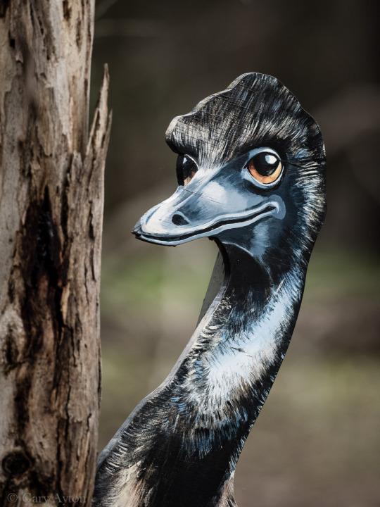 emu bokeh