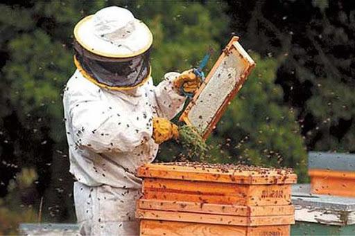 Los apicultores exigen medidas de protección para la miel