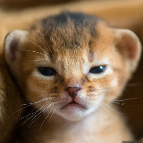 Scoopwhoop Videos This Video Of An Adorable Lion Cub Trying To