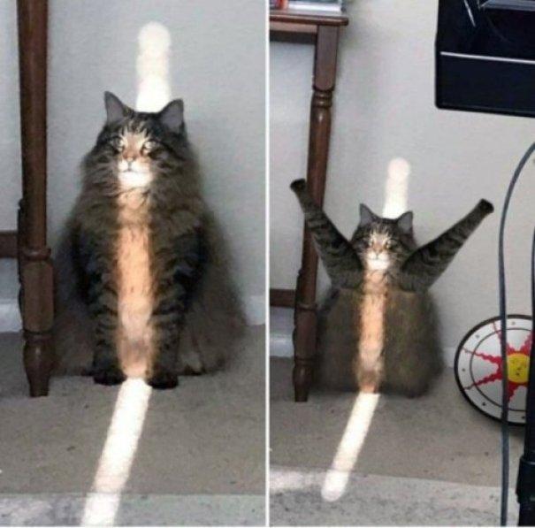 El Saludo al Sol gatuno