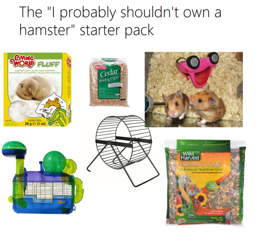 Lolcats Hamster Lol At Funny Cat Memes Funny Cat Pictures
