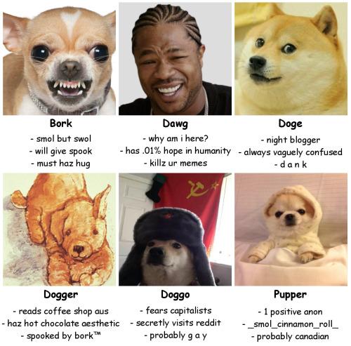 Cute Doggo Images On Favim Com