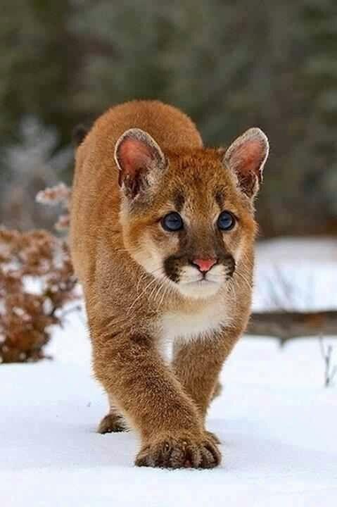 young cougar tumblr