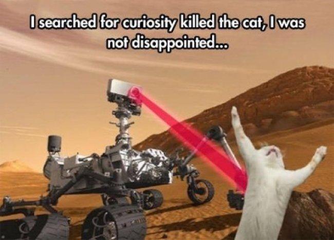 Busqué la curiosidad mató al gato