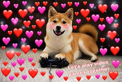 Dog Meme Wallpapers Top Free Dog Meme Backgrounds Wallpaperaccess