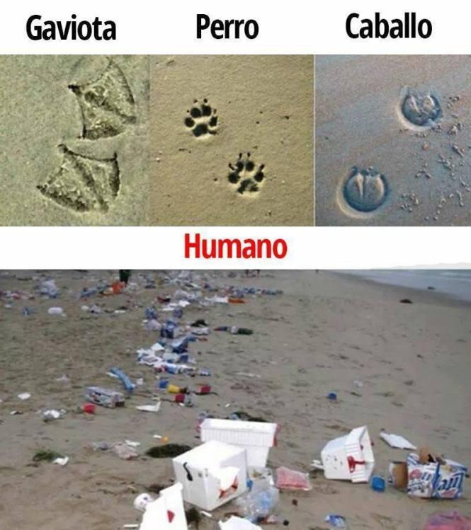 Y así es la huella que deja el ser humano