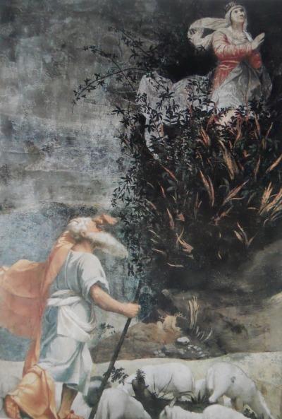 burning bush strauch # 42