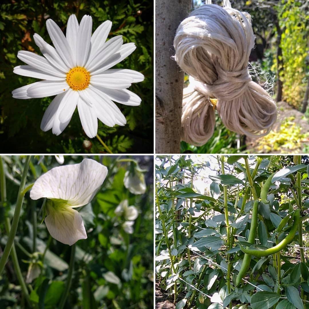 IN MY PLACECrossed lines I shouldn't have crossed#scoralieta #nature #flower #flora #leaf #summer #garden #grass #field...