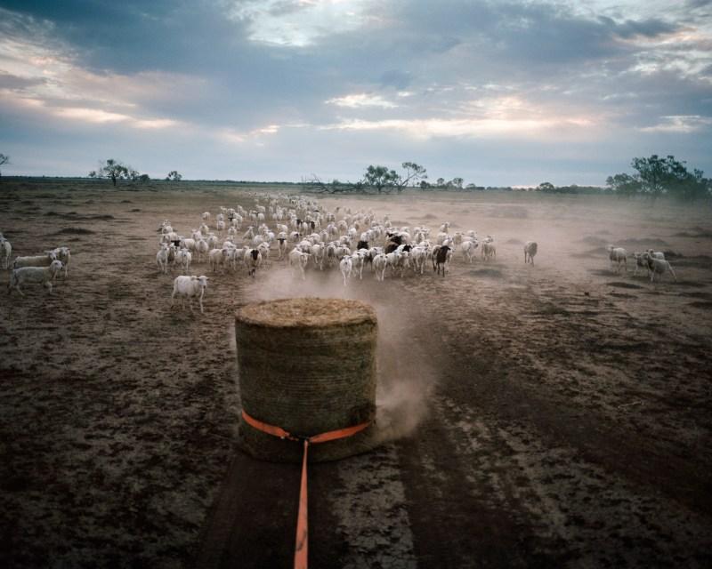 Гас Буллен таскает сено, которое будет кормить овец на Данмор Проперти около Пиллиги в декабре 2018 года.