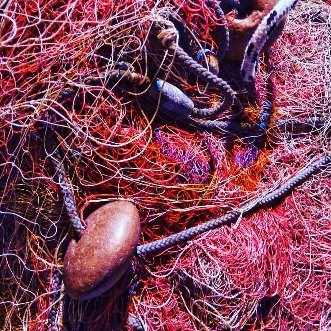 #sea #net #invertebrate #biology #marine #ball #ocean #nature #echinoderm #science #closeup #decoration #tropical #shining...