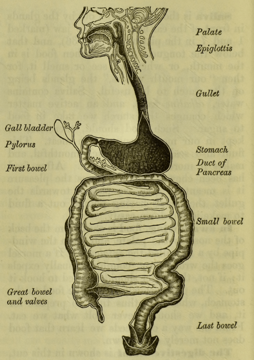 digestive system diagram | Tumblr