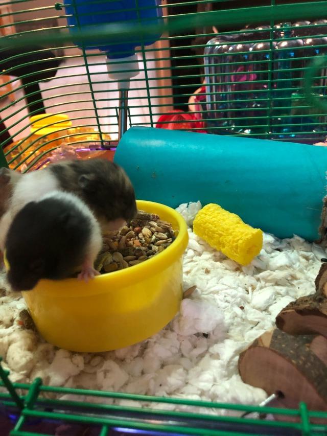 Scared Hamster Scaredhamster Twitter
