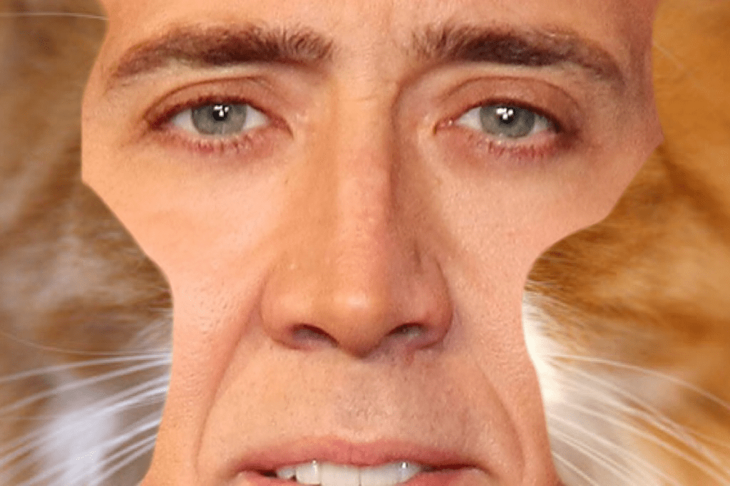 Nicolas-cage-cats • Nick Cage Cat Phase One