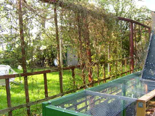 Reihenhausgarten - Trennung zum Nachbarn - Mein schöner Garten Forum