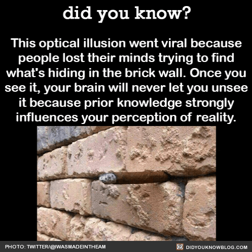 Prior knowledge strongly influences your perception of reality. This optical illusion went viral because people lost their minds trying to find what's hiding in the brick wall. Once you've seen it, your brain will never let you unsee it. If you're...