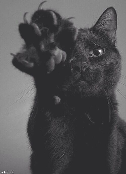 Kết quả hình ảnh cho black cat tumblr