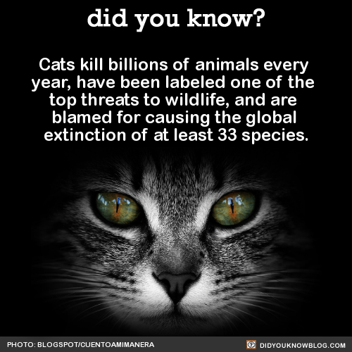 Cats kill billions of animals every year, have been labeled one of the top threats to wildlife, and are blamed for causing the global extinction of at least 33 species. Source Source 2 Source 3 Today is National Blame Someone Else Day, which occurs...