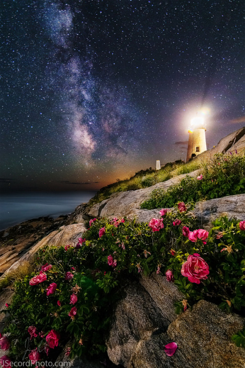 "drxgonfly: "" The Roses of Pemaquid Point (by Jon Secord) """