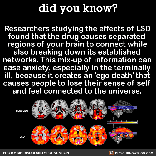Researchers studying the effects of LSD found that the drug causes separated regions of your brain to connect while also breaking down its established networks. This mix-up of information can ease anxiety, especially in the terminally ill, because it...