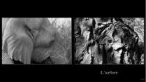 arbre_elephant