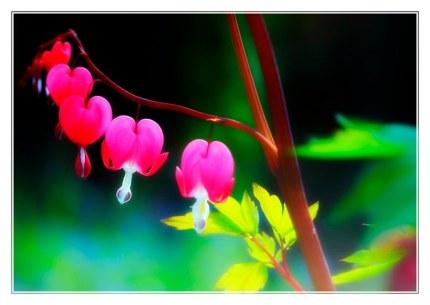 fleur de marie_0647