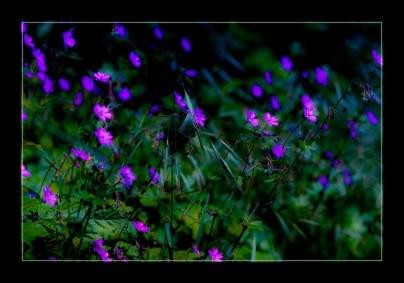 fleur_