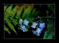fleur_4883