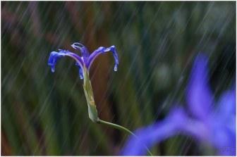 flore (1)