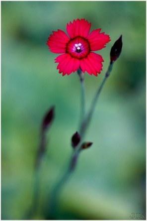 flore (11)