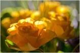 flore (29)