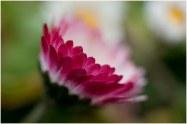 flore (30)