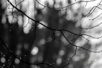 serge - theme noir et blanc - 16