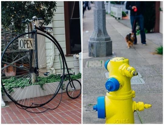 dog friendly Sausalito Bay Area pet friendly staycation