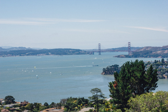 Bay Area hikes with dogs, hiking in Tiburon, dog friendly hikes in Marin