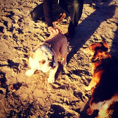 dog friendly beaches in Santa Barbara, where to take your dog in Santa Barbara