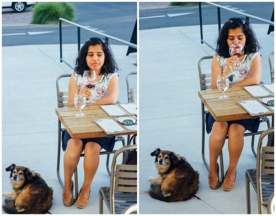 dog friendly Sebastopol, The Barlow, dog friendly wine tasting