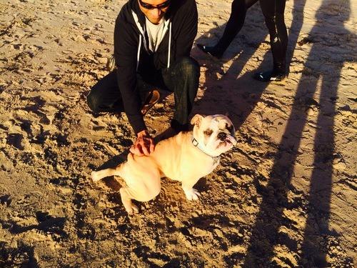 pet friendly Santa barbara, dog friendly beaches in Santa Barbara, dog friendly Santa Barbara