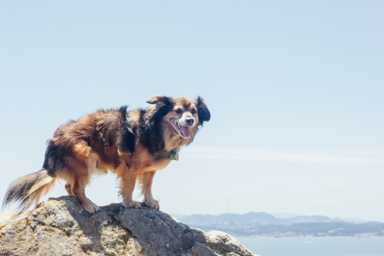 dog friendly hiking Tiburon St. Hilary Open space Preserve, Bay Area hikes with dogs