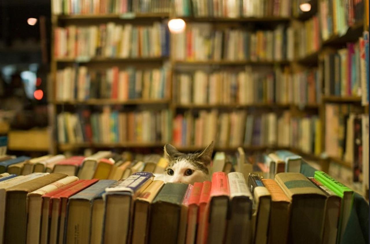Kết quả hình ảnh cho book store tumblr