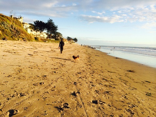 pet friendly Santa barbara, dog friendly beaches in Santa Barbara, dog friendly Santa Barbara