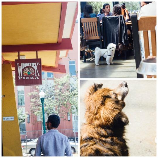 dog friendly restaurants Santa Cruz travel pets