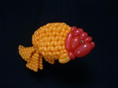 ランチュウ Ranchu (goldfish) 2016.7.3