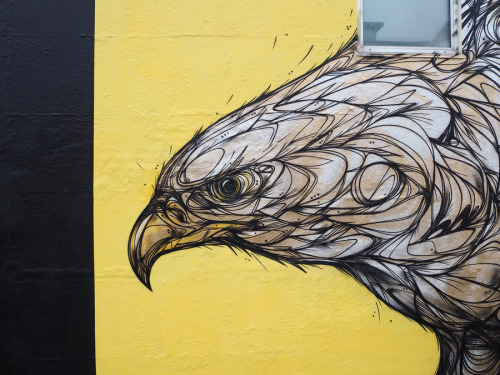 "zeds:""Golden Eagle"" by Dzia"