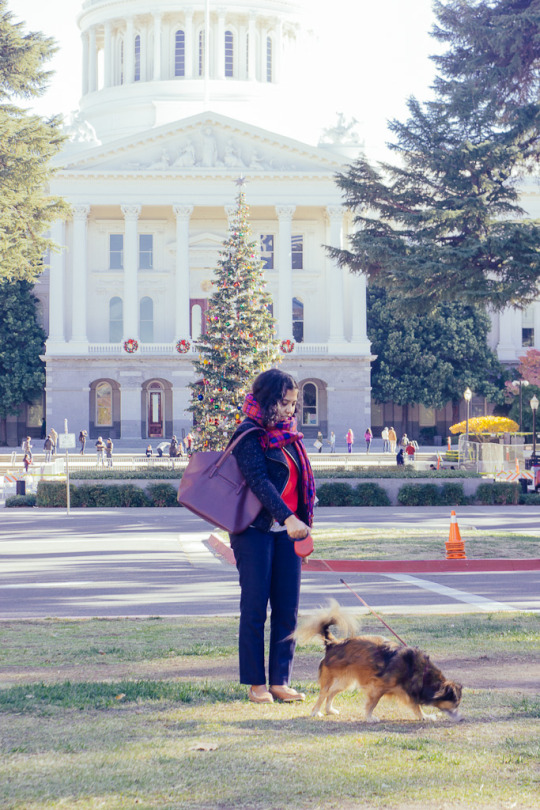 dog friendly sacramento, what to do with your dog in Sacramento, how to spend time with your dog in Sacramento, dog friendly guide to Sacramento, dog friendly activities in Sacramento