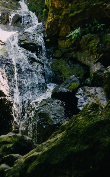 Wawaterfall hikes bay area, Waterfall hiking trails, hiking trails to waterfalls in the Bay Area, dog friendly waterfall hikes in the Bay Area, Bay Area hiking trails with waterfalls, Cascade Falls, Cataract Falls, Mt. Tamalpais, Marin waterfalls