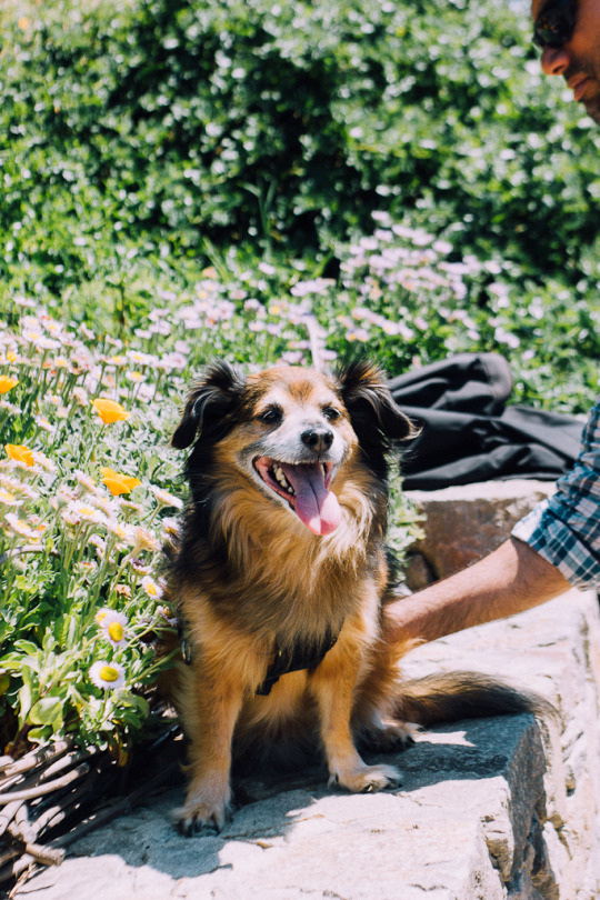 dog friendly San Francisco, dog friendly guide, dog friendly spots in San Francisco, where to take your dog in San Francisco