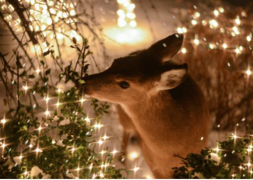 amandaricks.com/deer-christmas/