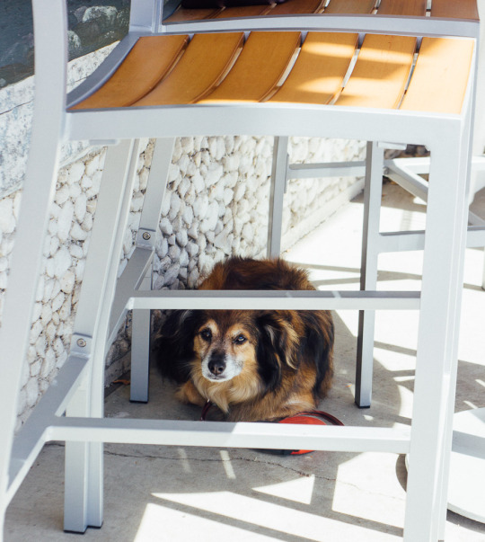 dog friendly restaurants in Sebastopol