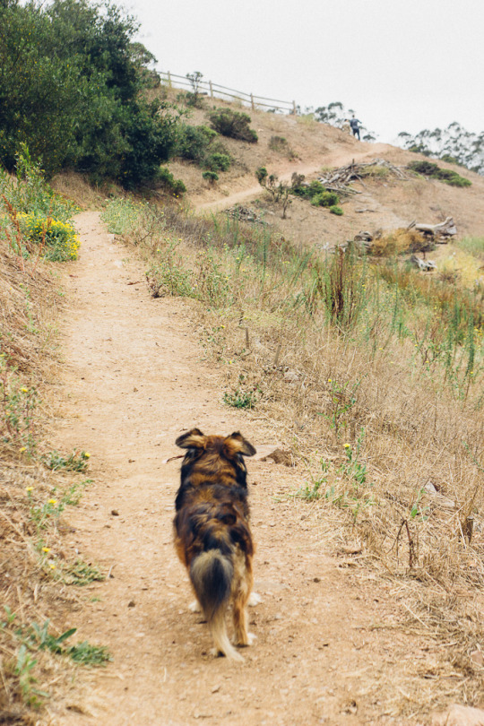 dog friendly San Francisco, dog friendly guide, dog friendly spots in San Francisco, where to take your dog in San Francisco, dog friendly parks in San Francisco, dog friendly SF parks, dog parks in SF, SF dog parks, San Francisco dog parks, Glen Canyon Park